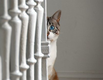 cat behind post spying vibragiel