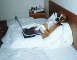 dog in bed w computer.jpg