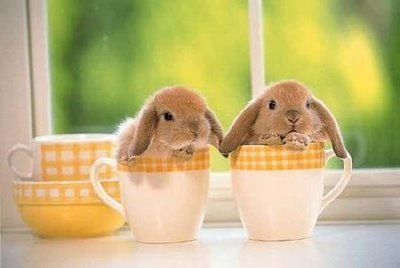 rabbit pair in teacups.jpg