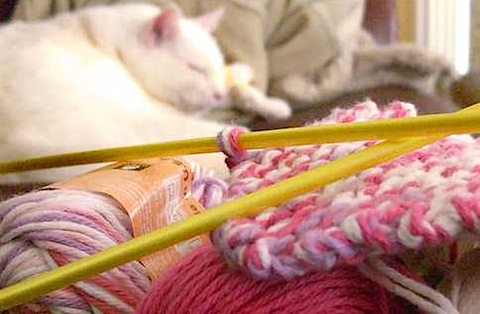 Happiness is Pretty Pink Yarn and a Purring Cat.... on Flickr - Photo Sharing!_1231093077702.jpeg